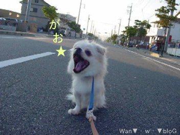 yuen6.jpg